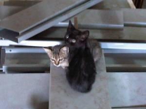 Shadow&Cat1