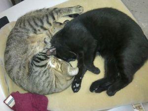 Shadow&Cat3